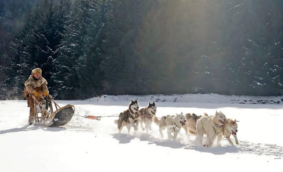 mushing deportes de invierno